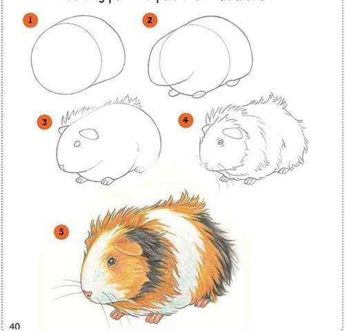 hamster-nasil-ciziliyor