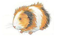 Öğrenci Etkinlikleri Hamster Nasıl Çizilir ?